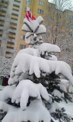 http://images.vfl.ru/ii/1610175652/3a852b9e/32895361_m.jpg