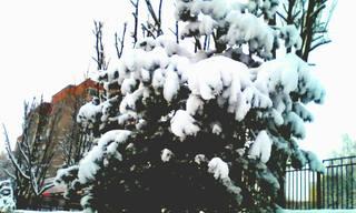 http://images.vfl.ru/ii/1610260694/2f332246/32903919_m.jpg