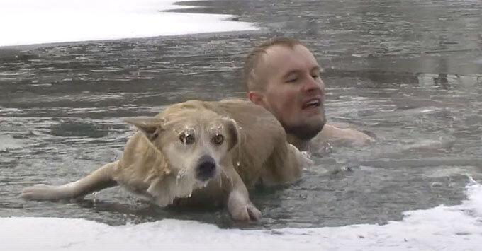 Корреспондент «Мира Белогорья» помог спасти собаку, провалившуюся под лед - Новости радио OnAir.ru