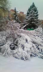http://images.vfl.ru/ii/1611813318/5654121e/33125366_m.jpg