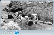 http//images.vfl.ru/ii/16135408/a2c0b003/33364512.png