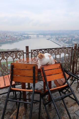 http://images.vfl.ru/ii/1617819601/eb550dea/33989225_m.jpg