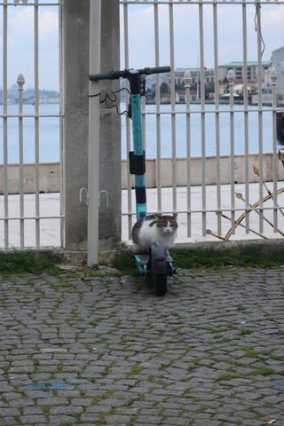 http://images.vfl.ru/ii/1617819739/0a5fb45e/33989277_m.jpg