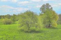 Парк Дворца молодёжи в мае. Фото Морошкина В.В.