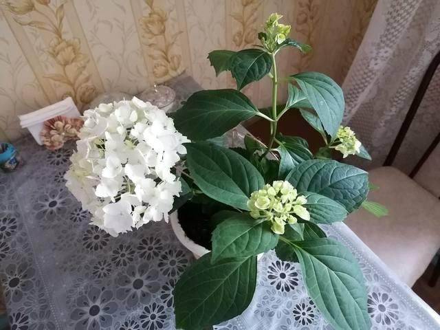 http://images.vfl.ru/ii/1620970066/2049d9d2/34446504_m.jpg