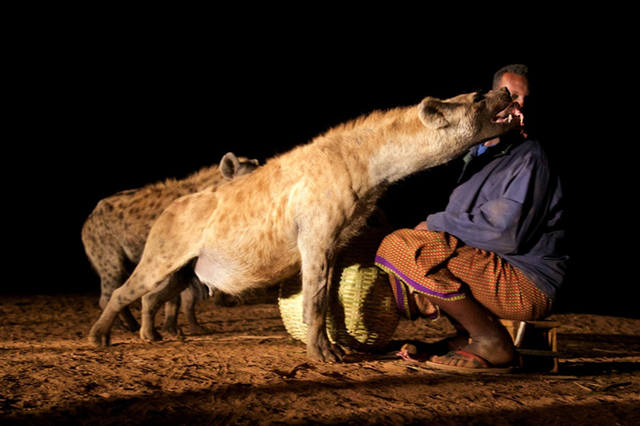 hyenaman-8