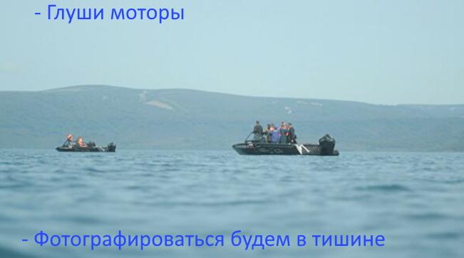 http://images.vfl.ru/ii/1629369047/6b68f82f/35550332.jpg