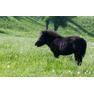 природный парк «Кудыкина гора» 18-2