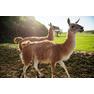 природный парк «Кудыкина гора» 19