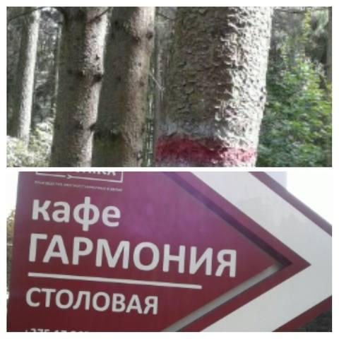 http://images.vfl.ru/ii/1631636651/b6757731/35863411_m.jpg