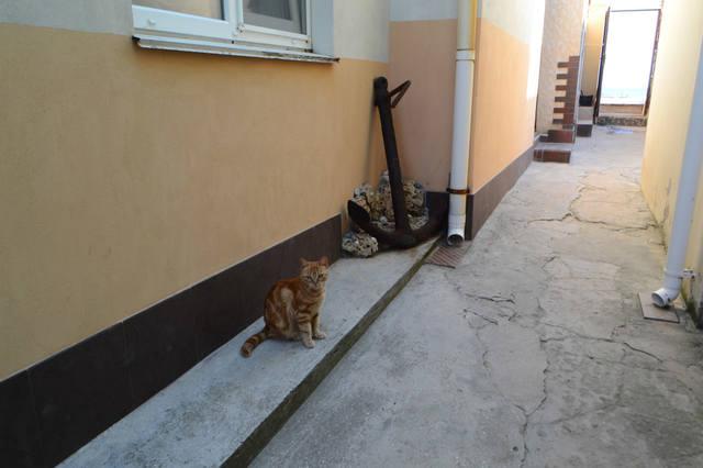 http://images.vfl.ru/ii/1632412021/9b0f8147/35983097_m.jpg