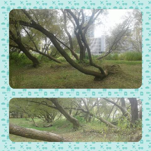 http://images.vfl.ru/ii/1632832027/6291fd1d/36045621_m.jpg