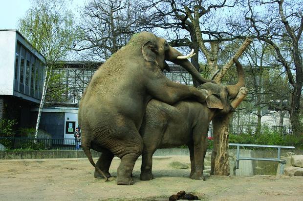 Порно с членом как у слона