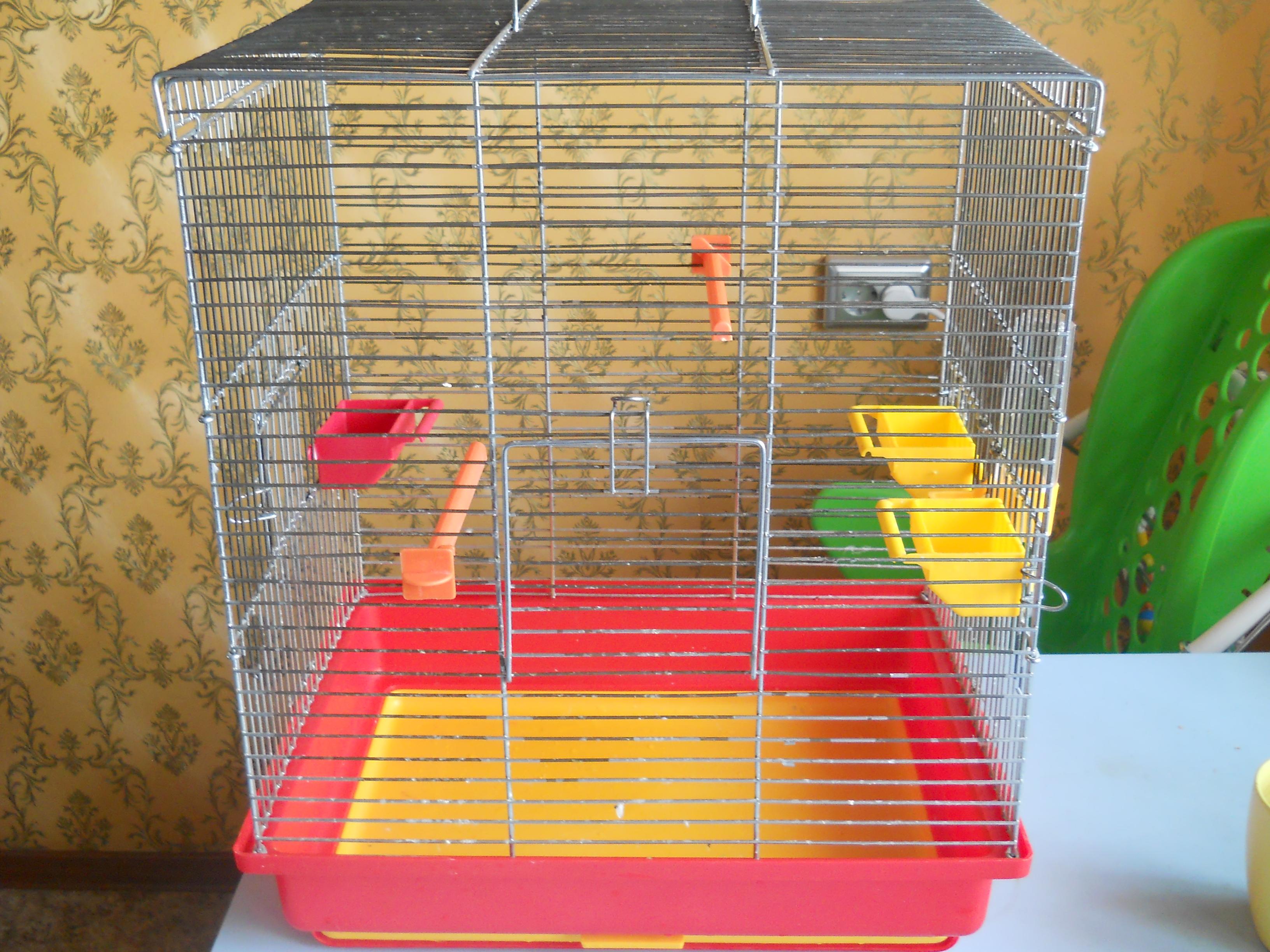 Уход и содержание попугая корелла в 13