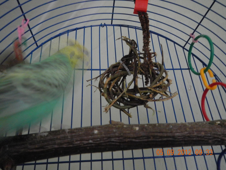 Гнездо (домик) для волнистых попугаев - размеры, фото, купить 54