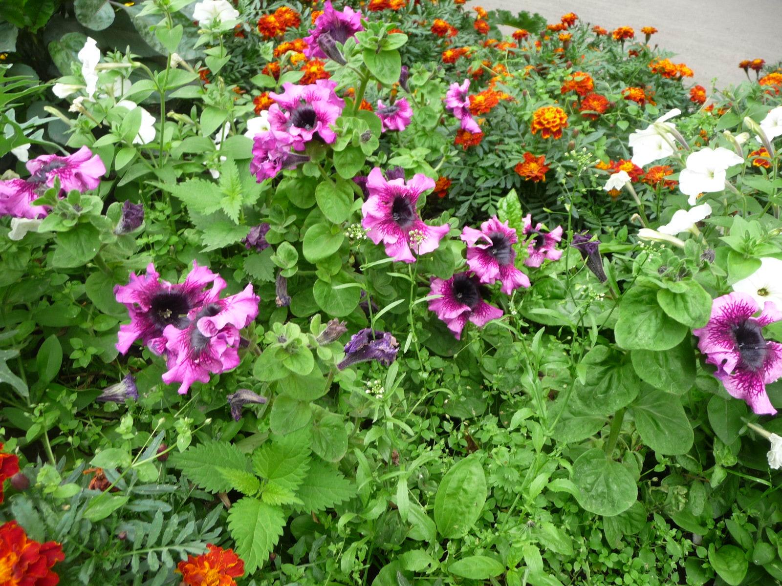 Цветы на даче которые любят тень фото
