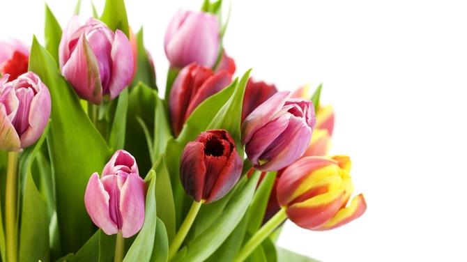 http://images.vfl.ru/ii_save/1394728775/93b7f0b7/4491710.jpg