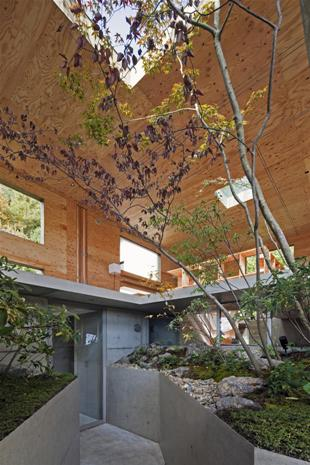 деревья в дома