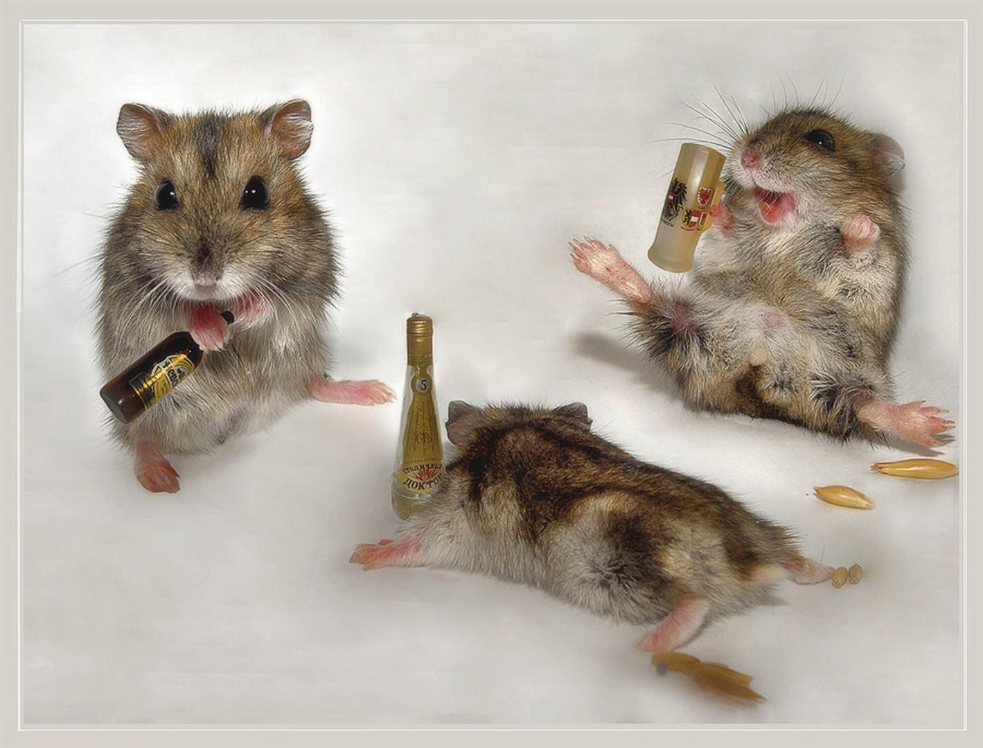 Прикольные картинки с крысами и мышами, день жкх