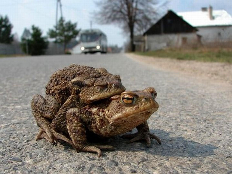 Прикольные картинки лягушки жабы это