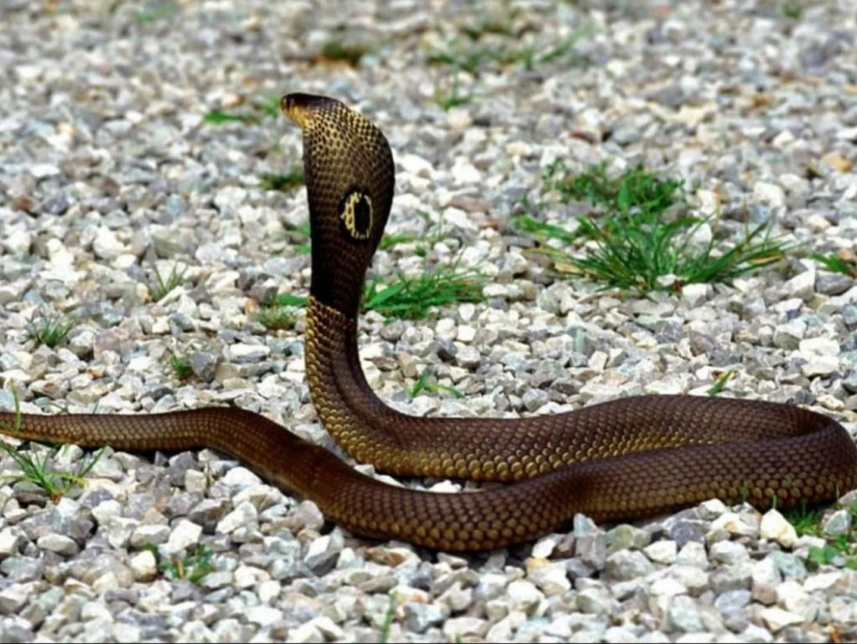 все виды змей фото с названиями папа спейбл ленивый