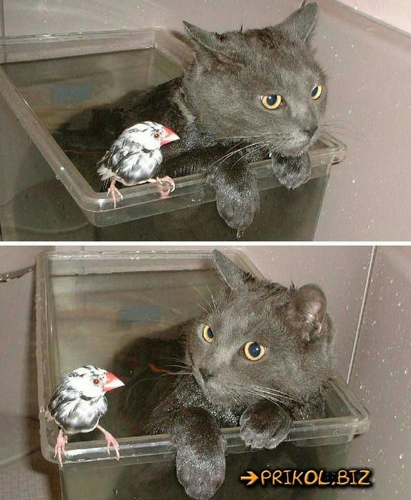 Смешные картинки про кошек с матами, картинки