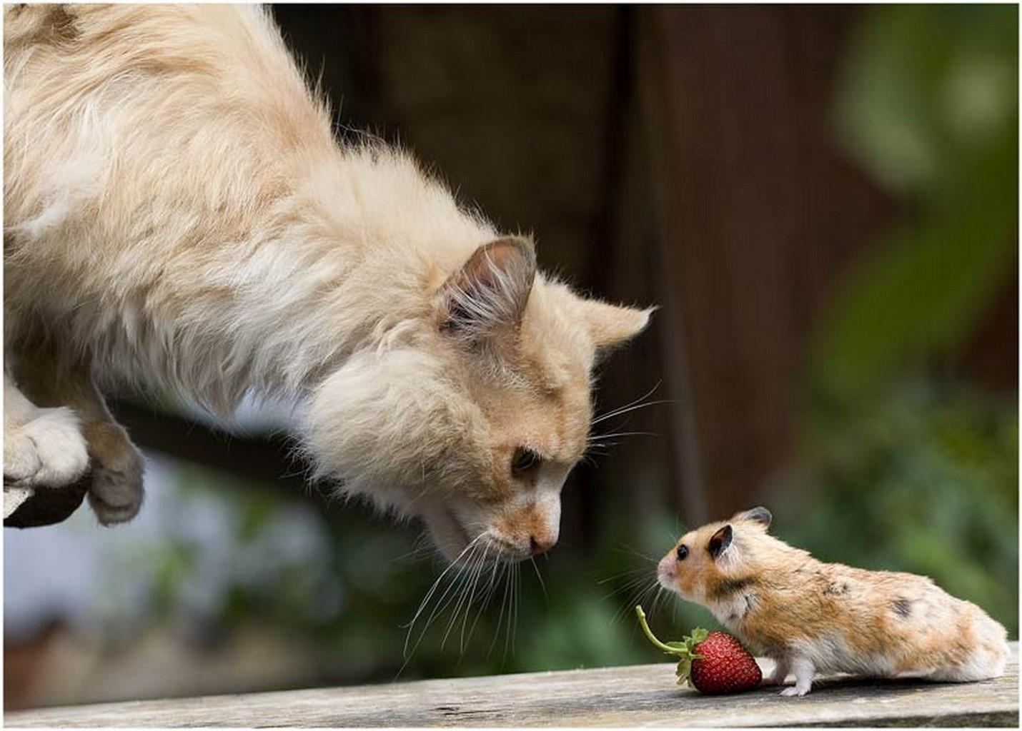 Открытки, мышь и кот смешные картинки