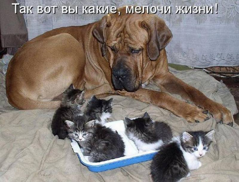 Картинки с надписями кошки собаки