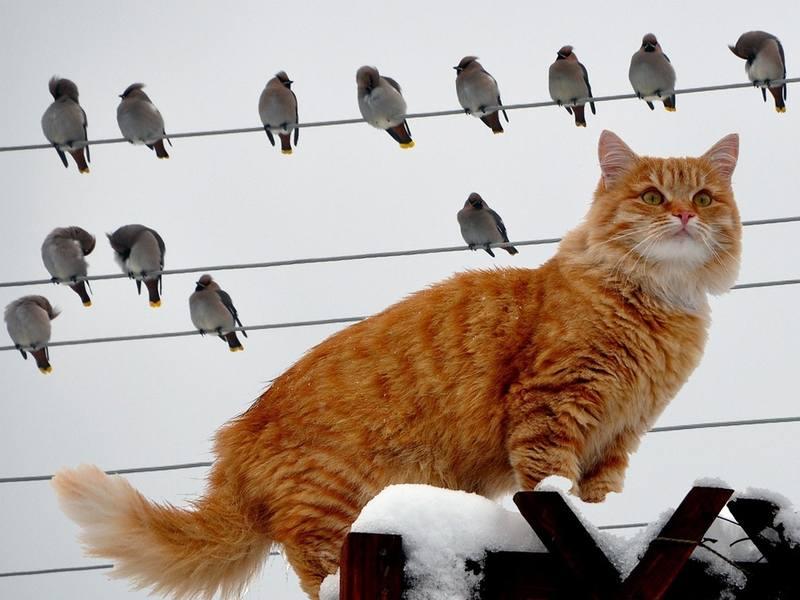 Смешные картинки про мартовских котов с надписями