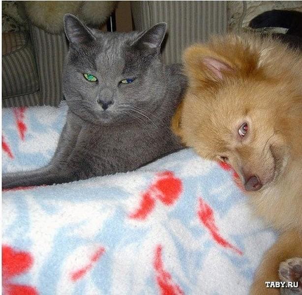 Картинки приколы с кошками и собаками и надписи, магазины открытки