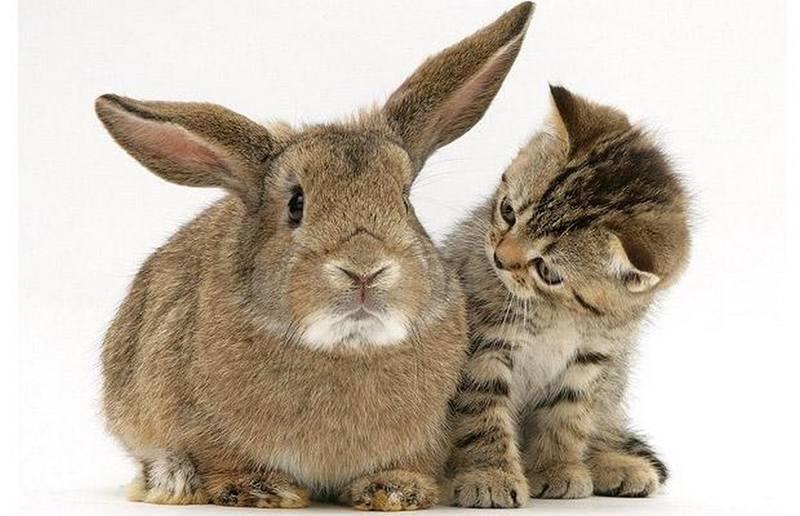 Открытки заяц и кот