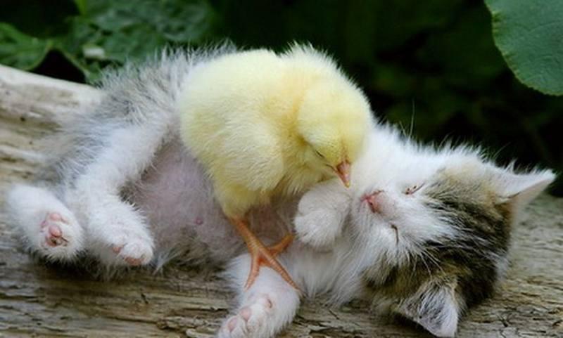 Картинки с добрым утром прикольные с животными и птицами