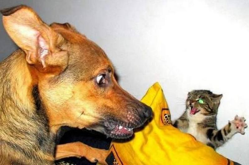 Картинки смешные про котов и собак с надписями смешные до слез