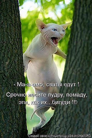 http://images.vfl.ru/ii/1343106628/40bfb139/755849_m.jpg