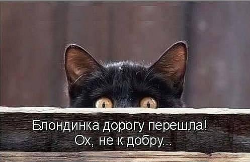 http://images.vfl.ru/ii/1343125644/00b96fa3/756673_m.jpg