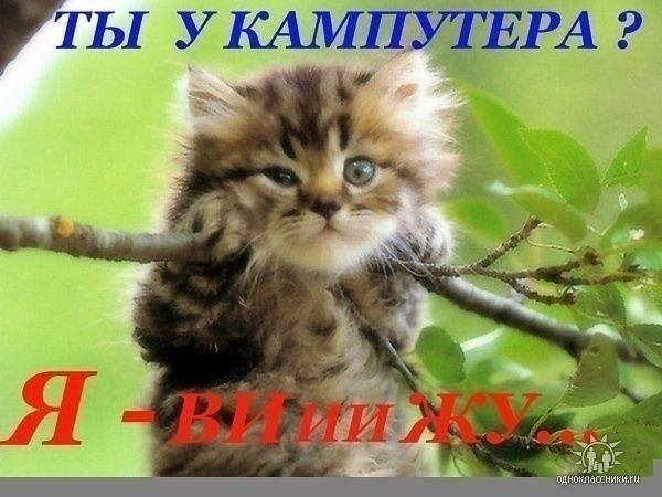http://images.vfl.ru/ii/1343125657/11ebb863/756674_m.jpg