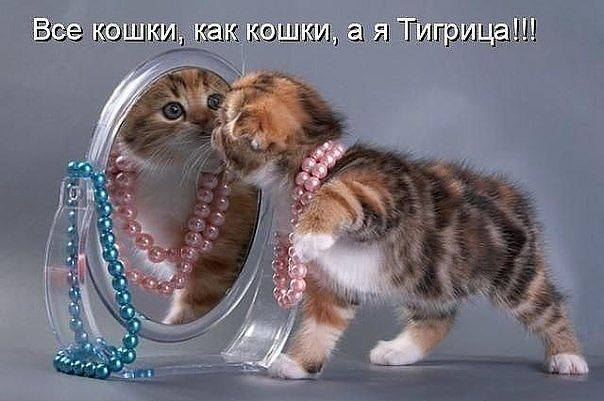 http://images.vfl.ru/ii/1343125685/4dd907e4/756677_m.jpg
