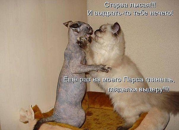 http://images.vfl.ru/ii/1343125738/aa55387c/756681_m.jpg