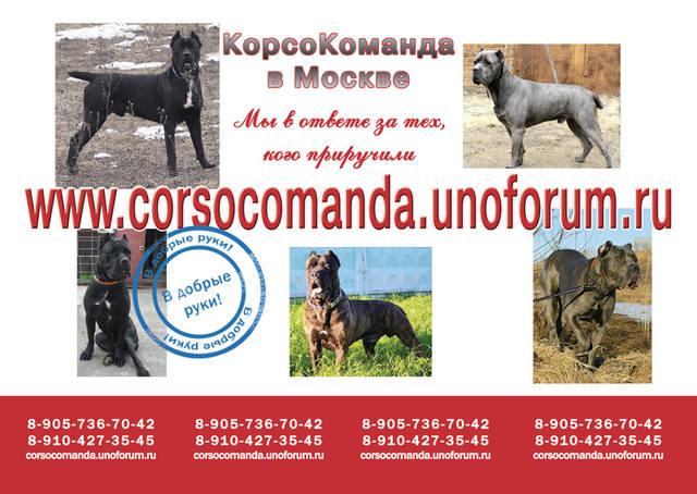 http://images.vfl.ru/ii/1394652003/56fa7f7c/4482949_m.jpg