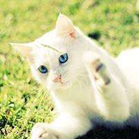 http://images.vfl.ru/ii/1401627287/055db272/5309318_m.jpg