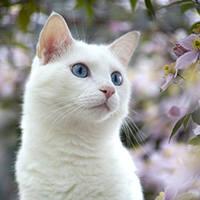 http://images.vfl.ru/ii/1401627287/c7d813c4/5309319_m.jpg