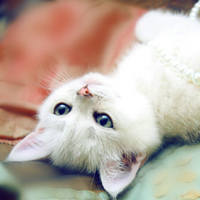 http://images.vfl.ru/ii/1401627287/e2d927f1/5309324_m.jpg