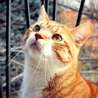 http://images.vfl.ru/ii/1401627456/3e55788b/5309360_m.jpg