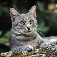 http://images.vfl.ru/ii/1401627604/a6e6cf64/5309372_m.jpg
