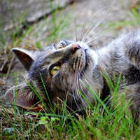 http://images.vfl.ru/ii/1401627604/e0fea3e8/5309383_m.jpg