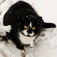 http://images.vfl.ru/ii/1401627735/2c5b7b7c/5309405_m.jpg