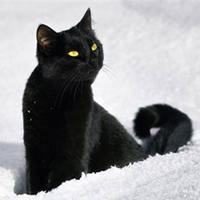 http://images.vfl.ru/ii/1401627766/0e5da2ed/5309413_m.jpg