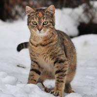 http://images.vfl.ru/ii/1401627900/720107cc/5309439_m.jpg