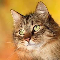 http://images.vfl.ru/ii/1401627900/b60e5595/5309436_m.jpg