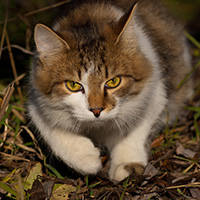 http://images.vfl.ru/ii/1401627977/c10a9d1f/5309451_m.jpg